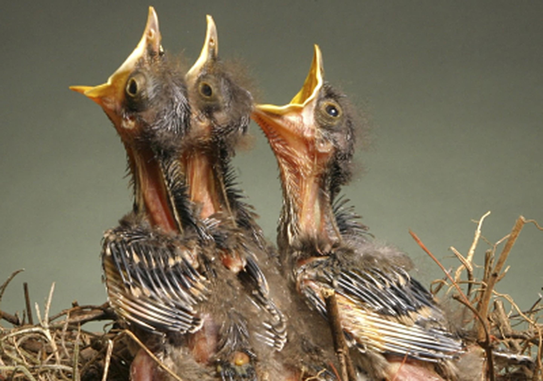 Ptici Opt.v1